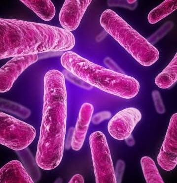 Bacillus 2-9-3