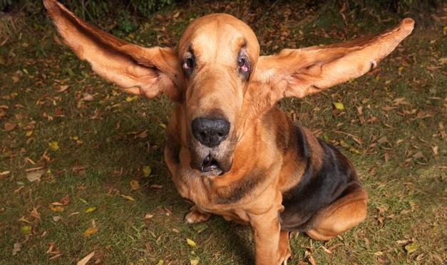 Urechi lungi