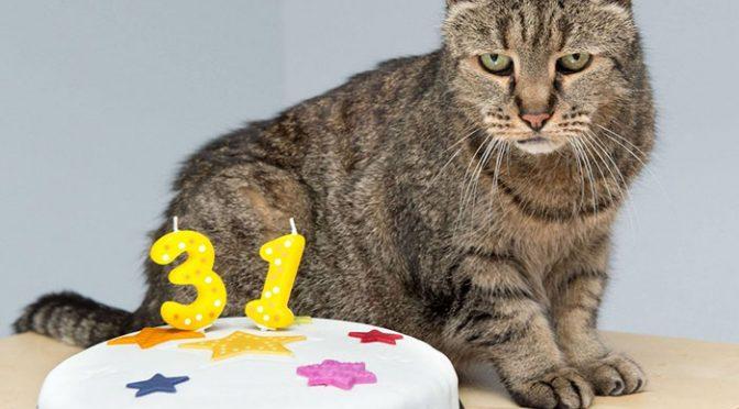 Cea mai longeviva pisica