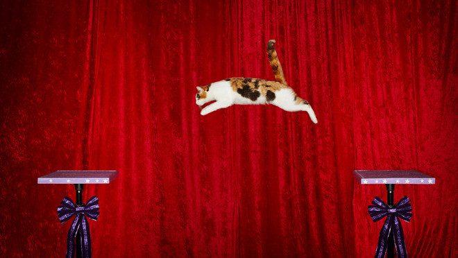 Cea mai lunga saritura a unei pisici