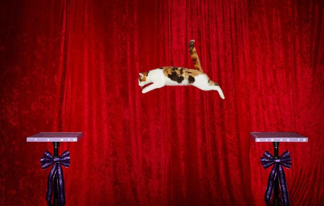 Saritura in lungime pisica