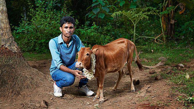 Cea mai mica vaca din lume