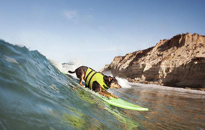 Caine placa de surf