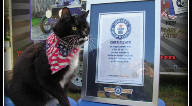 Cea mai lunga saritura a unei pisici domestice Update